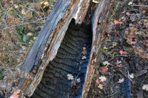 Log core