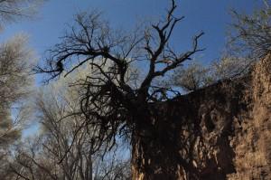 Mesquite overhang