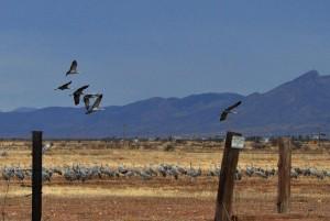 cranes landing