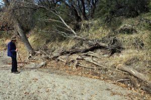 Long root
